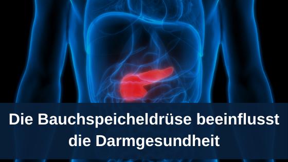 Die Bauchspeicheldrüse beeinflusst die Darmgesundheit