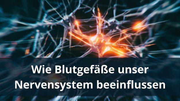 Wie Blutgefäße unser Nervensystem beeinflussen
