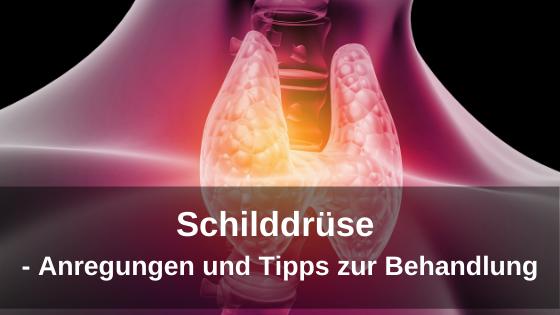 Schilddrüse - Anregungen und Tipps zur Behandlung